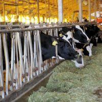 静岡の牧場がIoTで牛の状態管理 -センサを使って作業を効率化