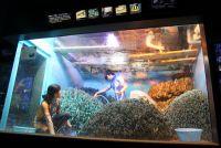 サンシャイン水族館「水槽ピカピカ大作戦! 」--生き物たちのレアな姿も