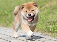 犬を飼う人は長生きする!「トイ」より「猟犬タイプ」がおすすめ