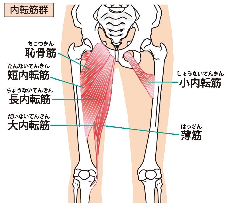 腿 筋 トレ 内