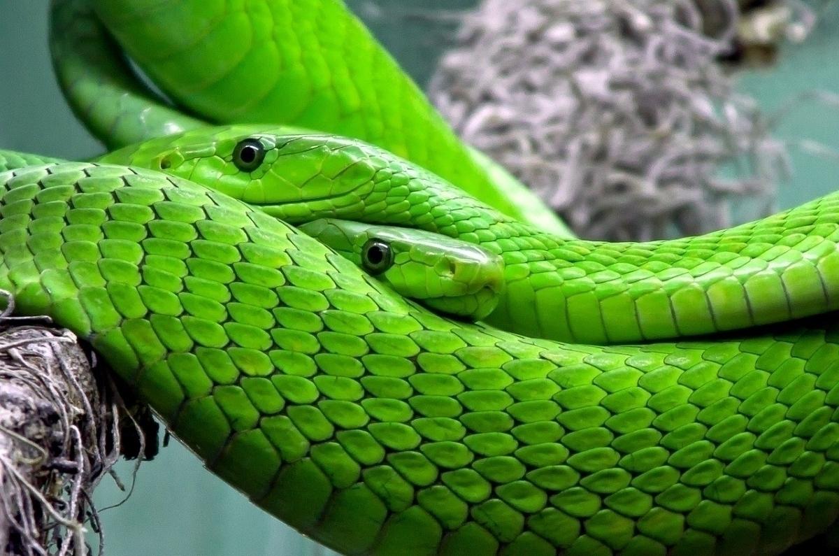 くる 出 て 蛇 が 夢 たくさん
