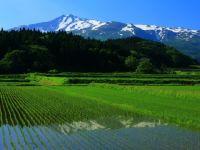 農業の6次産業化を加速する、最先端のICT技術