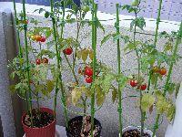 ベランダの家庭菜園、土の処分方法は?
