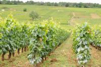 現地ブルゴーニュ発! 自分好みのワインの選び方とは?