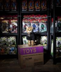 バンダイUKが猫と警備員契約(笑)
