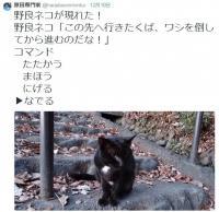 ネコの画像をツイートする時の楽しみ方『ネコマンド』って?
