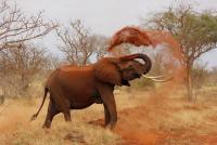 ゾウの鼻毛はどうなっているのか解説「すごい動物学」