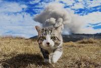 物怖じしないネコ、ニャン吉と飯法師さんのトホホ生活