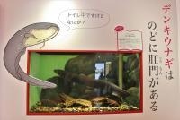 サンシャイン水族館「ざんねんないきもの展」がゆるくて癒される