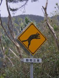 「イリオモテヤマネコ とびだし注意」道路標識 世界遺産候補の西表島ってどんなとこ?