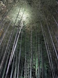 ひたすら竹を活用する本