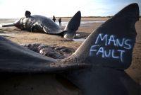 ケネディ前大使が語った「ゴミは中国、漁業は日本よ」の意味とは