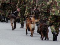 人間のために働いてきた軍用犬が殺処分へ、兵士が立ち上がる