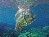 「後ろからギュッ」ウミガメとアザラシがじゃれ合う姿が可愛すぎる