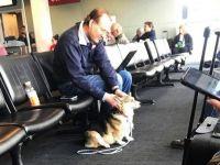 空港で見知らぬ男性に寄り添うコーギー犬、その理由に感動