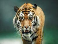 トラを発見し警察に通報、しかし待ち受けていたのは壮大なオチ