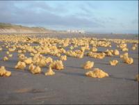 正体不明の黄色いスポンジ!一夜にして海岸を埋め尽くす フランス