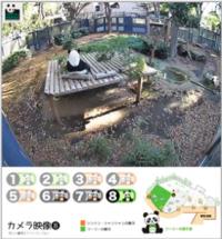 シャンシャン 19日からライブ配信「カメラ8台常時撮影」上野動物園