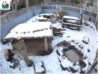 シャンシャン「初めての雪」飼育員さんと大はしゃぎ 上野動物園