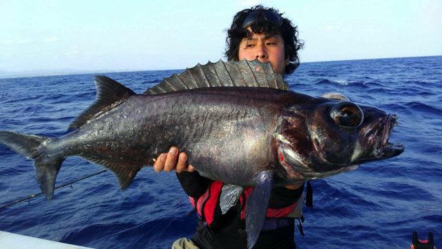 デメニギス 釣れ ない