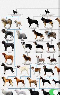 画面ぎっしりに犬!わかりやすい系統図でみる『犬図鑑』が楽しい♪