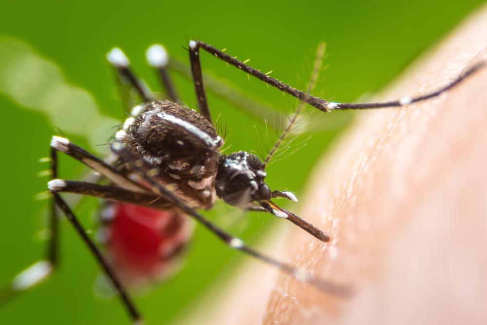 蚊より腫れる