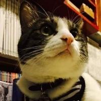 猫店員がお迎えしますニャ 店と保護猫が助けあう「猫だらけの本屋」オープンを目指し資金調達中