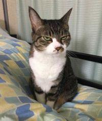 帰ってきた飼い主を「(じーーっ)」 お留守番していた猫ちゃんの伝わりすぎる表情がすごいことに……