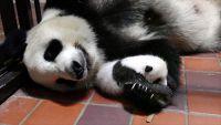 かわいいお名前よろしくね 上野動物園のジャイアントパンダの赤ちゃん 7月28日から名前を募集