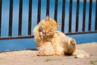 猫写真専門ストックフォトサイトが登場 猫好きはオンライン猫写真展としてもつかえそう