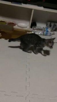 猫ちゃんの診察結果にビックリ……! 愛猫の変な歩き方を目撃して慌てて病院へ→「仮病ですね」
