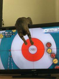 「ここを狙うにゃー!」 テレビ越しにカーリングの試合をお手伝いするにゃんこ監督が頼もしい