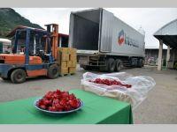 台湾ローゼル、日本向けに20トン出荷  東部・台東の名産