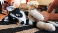 何でどうして?犬のお腹をさすると足をバタバタするのはなぜ?