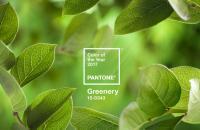 2017年のトレンドカラーは「緑」(パントン・カラー研究所)