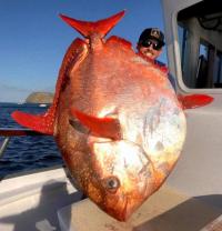 とったどー!巨大な深海魚、アカマンボウが釣り上げられネット上がギョギョギョ!っとな(アメリカ)