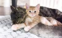 ボロボロに傷ついた老猫の心を開いた小さな毛皮の天使たち