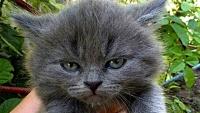どんな顔でも許せちゃう。なにやらご不満げな子猫たちの写真を詰め合わせでお届け
