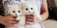 猫をモフモフするだけの簡単なお仕事です。アイルランドの動物病院で一日中猫を撫でたり抱っこするスタッフを募集中