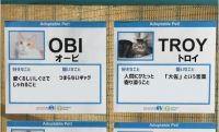 相性の良い飼い主に巡り合うために。猫たちの個性を面白いジョークをまじえて紹介する里親募集のプロフィールポスター(アメリカ)