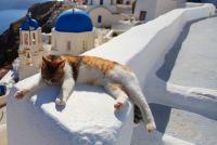 ギリシャにある猫島。白と青の美しいコントラストの中で優雅に暮らす、サントリーニ島の猫たち