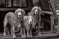 年老いた犬の持つ魅力。人に尽くすことを使命とし、死の間際まで無償の愛を注ぎ続ける、仙人のような老犬たちの姿