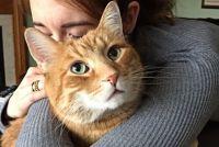 茶トラ猫についての9つのオモシロ豆知識