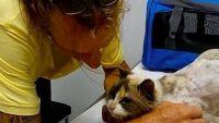 冒険好きな目と耳の不自由な猫が迷子となり、2か月後飼い主と再会