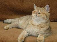 もし猫が地獄のミサワ化したら?顔のパーツがセンター寄りな猫たちのコラ画像