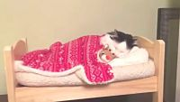 これが私のベッドなのよ!お気に入りの可愛いベッドでスヤスヤ眠る猫