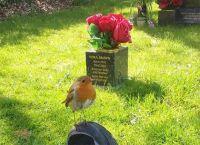 息子を亡くし、その墓の前で悲しみにくれていた母親の前に1羽の鳥が現れた。その鳥は彼女の悲しみをすべて運び去っていった。