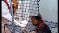 仲良くしたっていいじゃない?犬と猫とネズミのキャッキャウフフこのあとすぐ