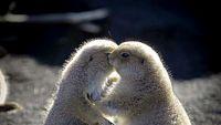 どこまでもやさしくなれそうな時間をお届け。ムネキュンな動物たちの写真20選