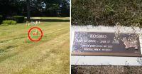 ペットの墓地で犬が墓の上に現れた?その驚きの姿を撮影した写真。